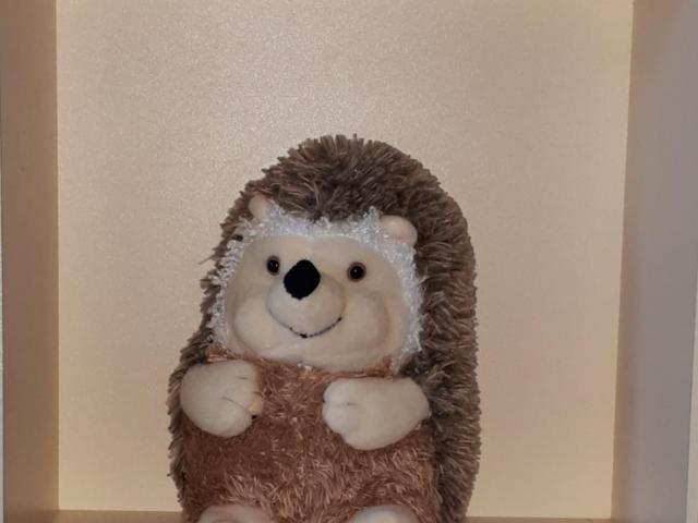 Hedgehog new - 1